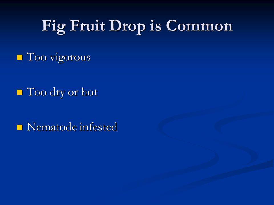 Fig Fruit Drop is Common Too vigorous Too vigorous Too dry or hot Too dry or hot Nematode infested Nematode infested