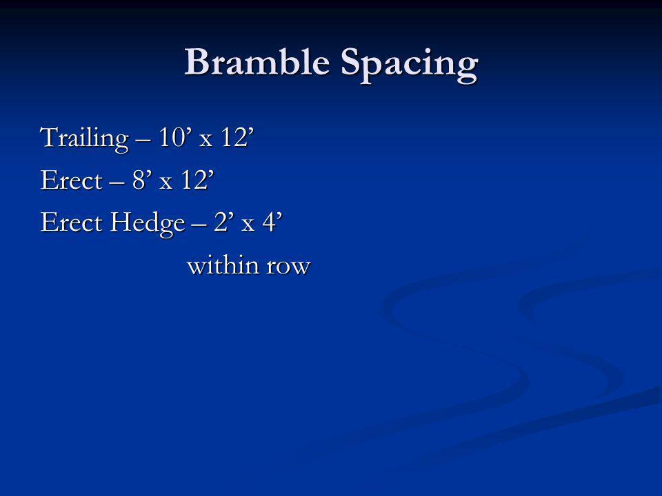 Bramble Spacing Trailing – 10 x 12 Erect – 8 x 12 Erect Hedge – 2 x 4 within row within row