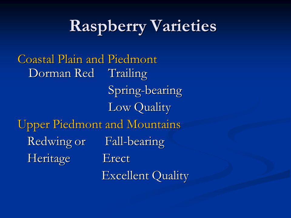Raspberry Varieties Coastal Plain and Piedmont Dorman Red Trailing Spring-bearing Spring-bearing Low Quality Low Quality Upper Piedmont and Mountains