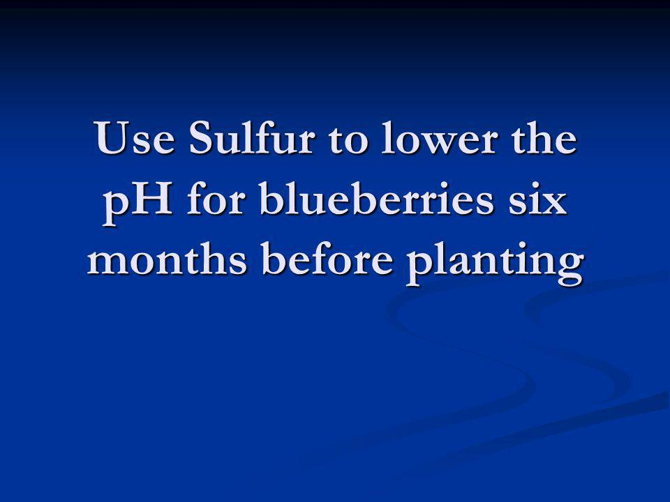 Use Sulfur to lower the pH for blueberries six months before planting