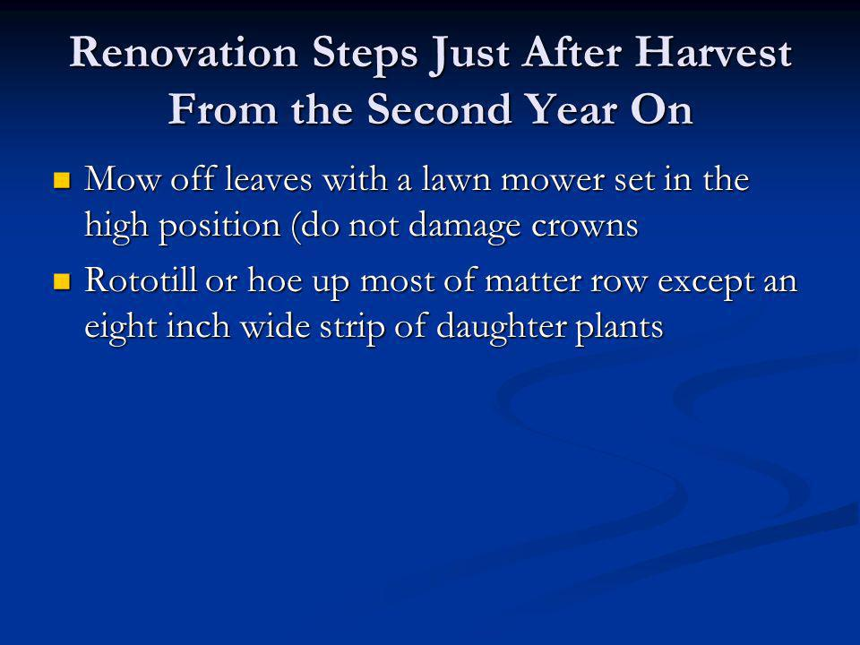 Renovation Steps Just After Harvest From the Second Year On Mow off leaves with a lawn mower set in the high position (do not damage crowns Mow off le
