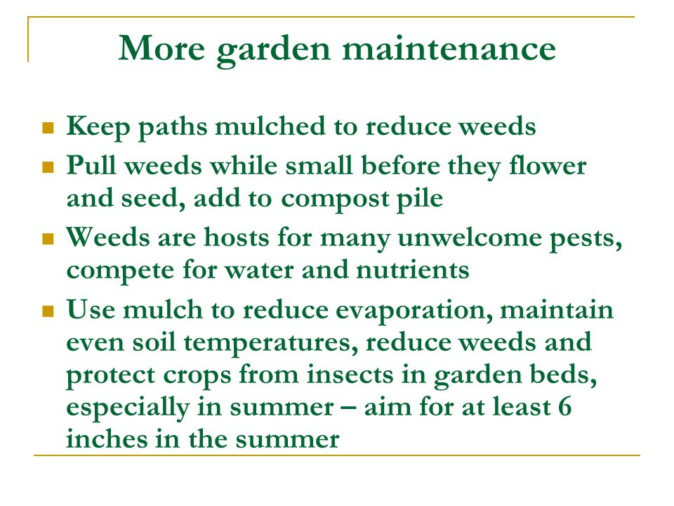 More garden maintenance Keep paths mulched to reduce weeds Pull weeds while small before they flower and seed, add to compost pile Weeds are hosts for many unwelcome pests, compete for water and nutrients Use mulch to reduce evaporation, maintain even soil temperatures, reduce weeds and protect crops from insects in garden beds, especially in summer – aim for at least 6 inches in the summer