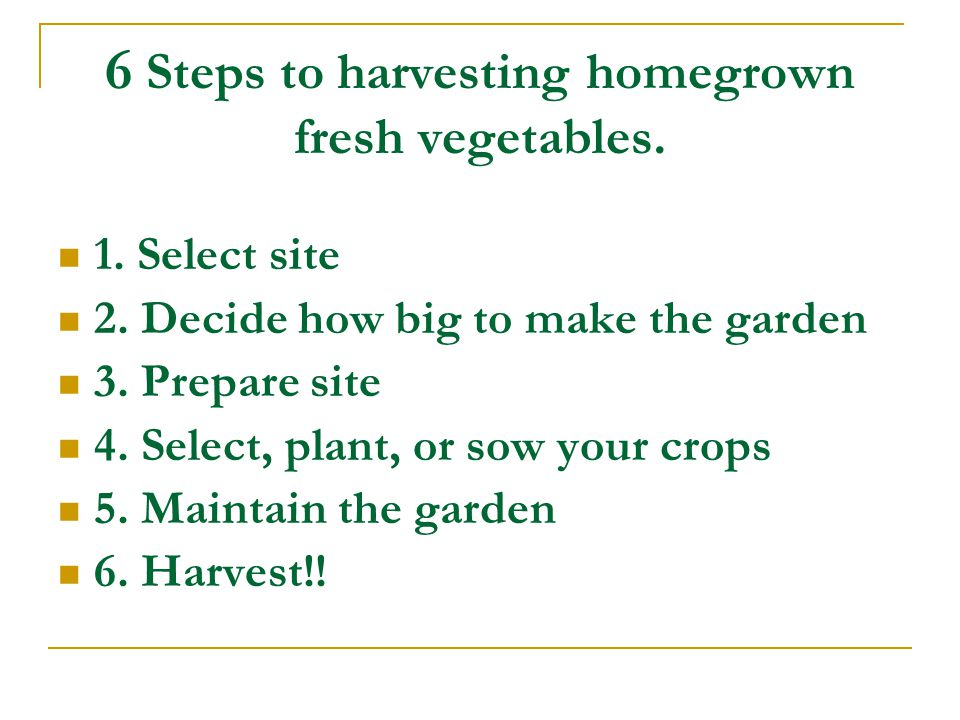 6 Steps to harvesting homegrown fresh vegetables. 1.