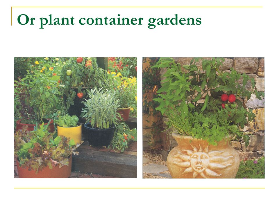 Or plant container gardens
