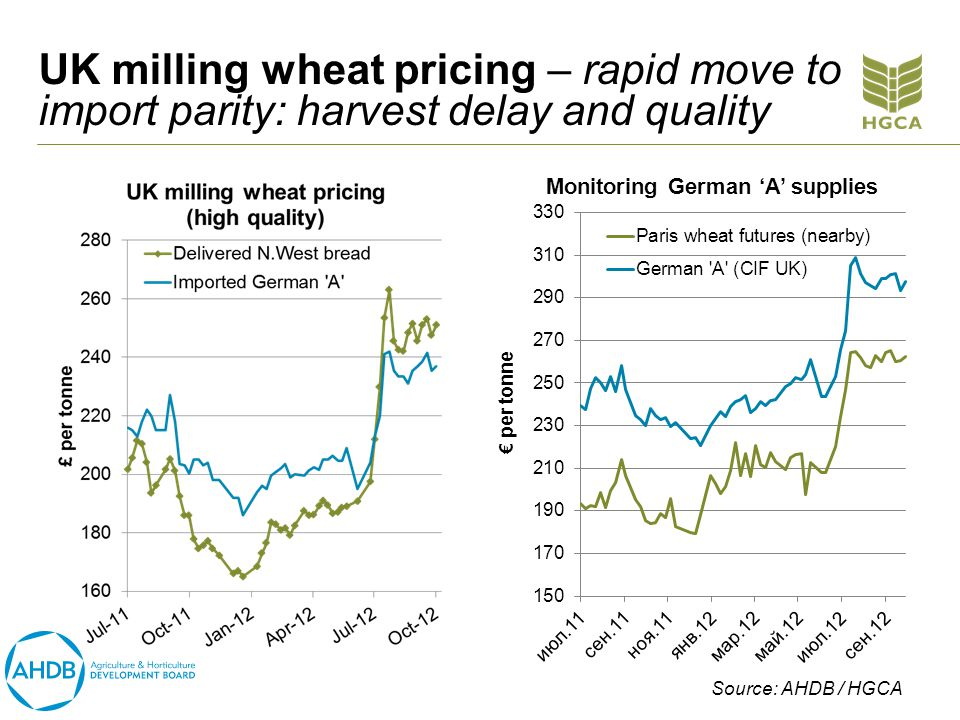 UK milling wheat pricing – rapid move to import parity: harvest delay and quality Source: AHDB / HGCA