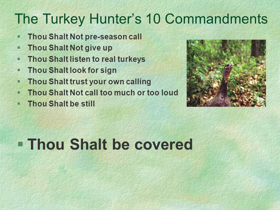 The Turkey Hunters 10 Commandments §Thou Shalt Not pre-season call §Thou Shalt Not give up §Thou Shalt listen to real turkeys §Thou Shalt look for sign §Thou Shalt trust your own calling §Thou Shalt Not call too much or too loud §Thou Shalt be still §Thou Shalt be covered