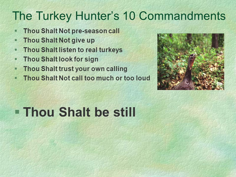 The Turkey Hunters 10 Commandments §Thou Shalt Not pre-season call §Thou Shalt Not give up §Thou Shalt listen to real turkeys §Thou Shalt look for sign §Thou Shalt trust your own calling §Thou Shalt Not call too much or too loud §Thou Shalt be still