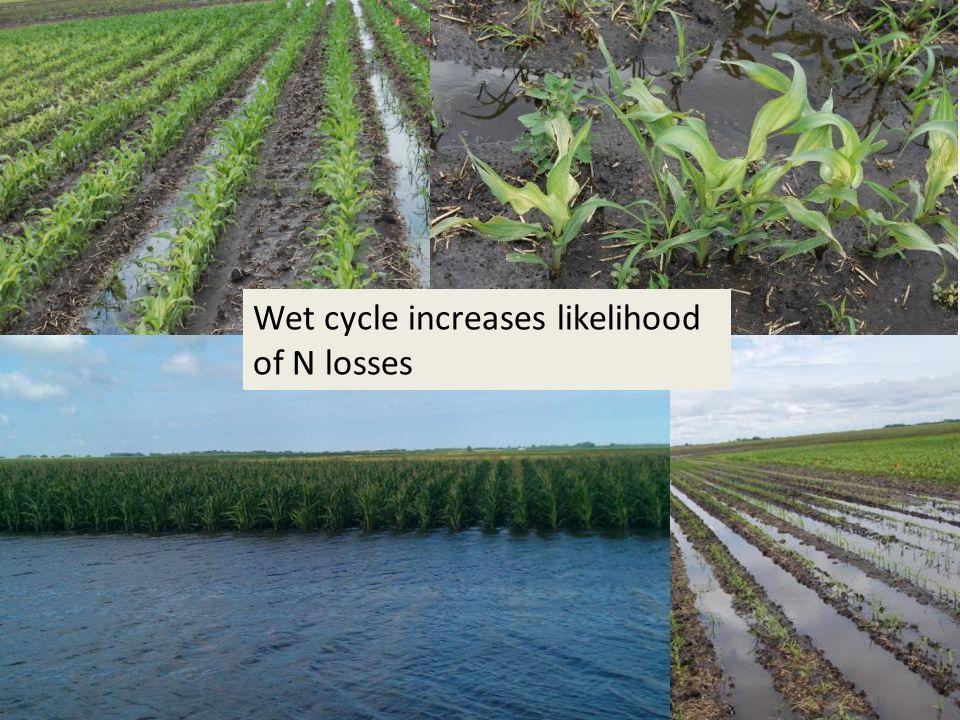 Wet cycle increases likelihood of N losses