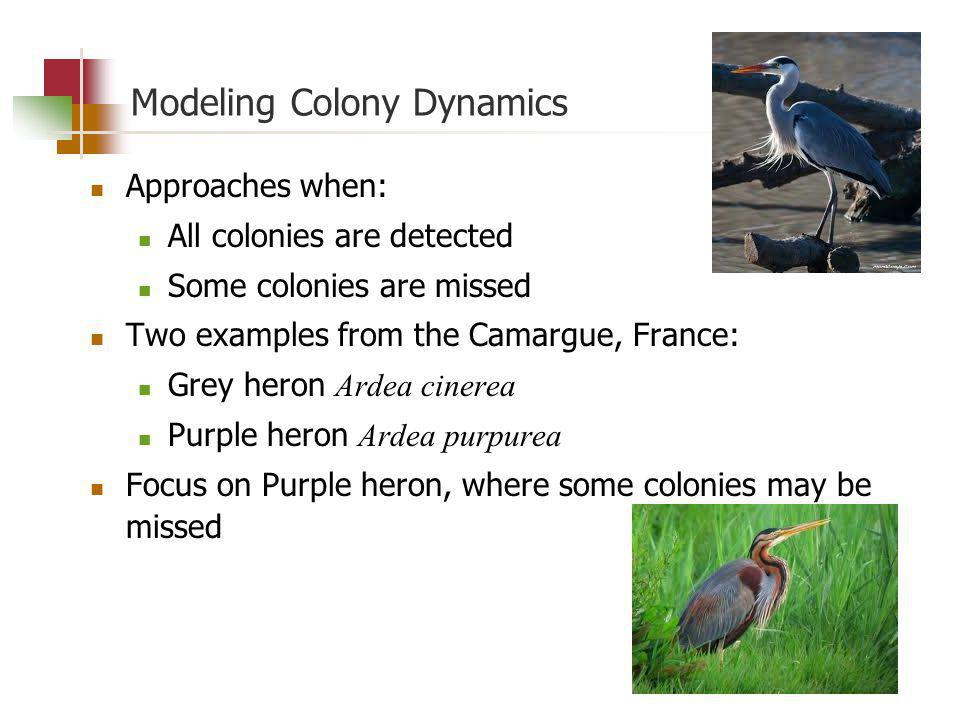 Modeling Colony Dynamics Approaches when: All colonies are detected Some colonies are missed Two examples from the Camargue, France: Grey heron Ardea cinerea Purple heron Ardea purpurea Focus on Purple heron, where some colonies may be missed