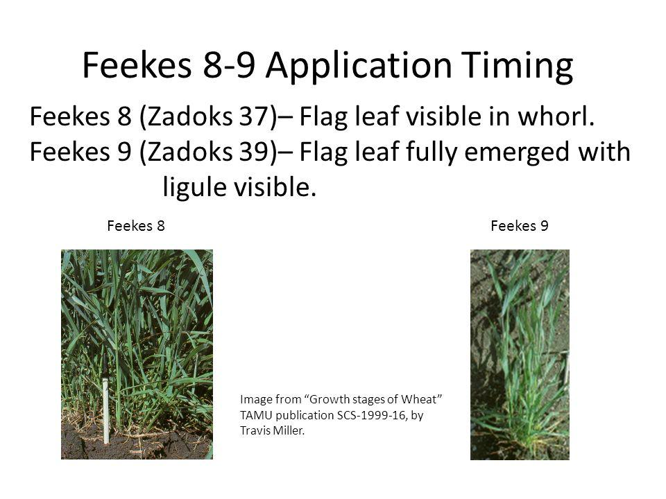 Feekes 8-9 Application Timing Feekes 8Feekes 9 Image from Growth stages of Wheat TAMU publication SCS-1999-16, by Travis Miller.