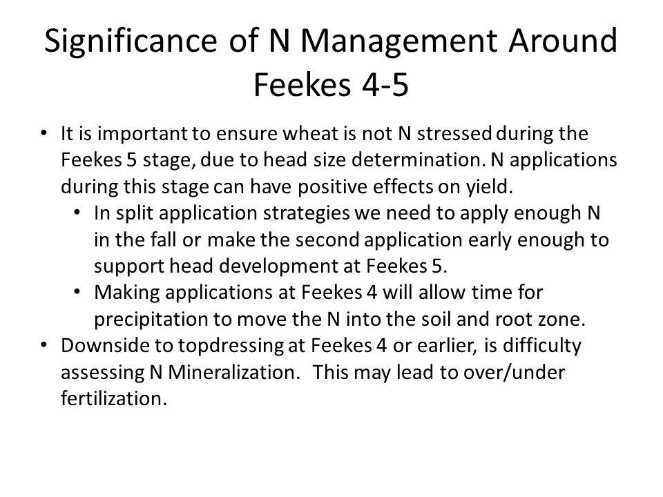 Significance of N Management Around Feekes 4-5 It is important to ensure wheat is not N stressed during the Feekes 5 stage, due to head size determination.
