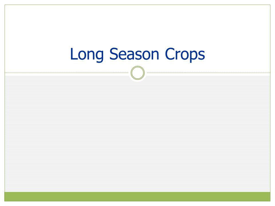 Long Season Crops
