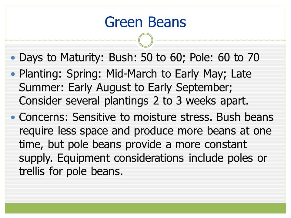 Green Beans Days to Maturity: Bush: 50 to 60; Pole: 60 to 70 Planting: Spring: Mid-March to Early May; Late Summer: Early August to Early September; Consider several plantings 2 to 3 weeks apart.