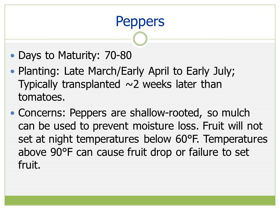 Peppers Days to Maturity: 70-80 Planting: Late March/Early April to Early July; Typically transplanted ~2 weeks later than tomatoes.