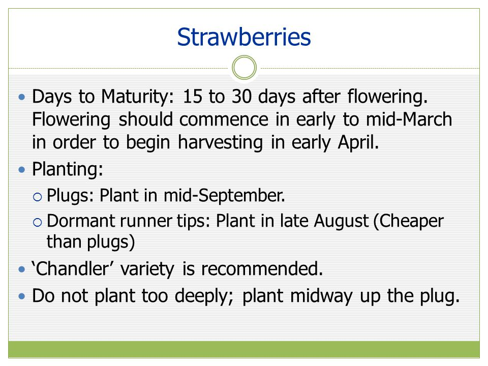 Strawberries Days to Maturity: 15 to 30 days after flowering.