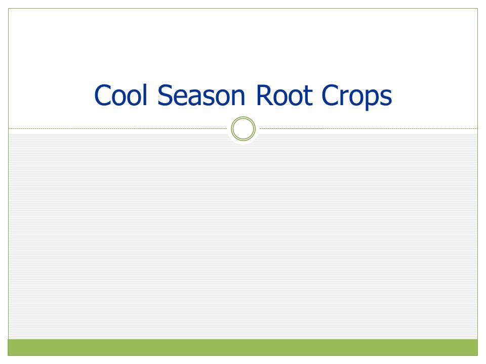 Cool Season Root Crops