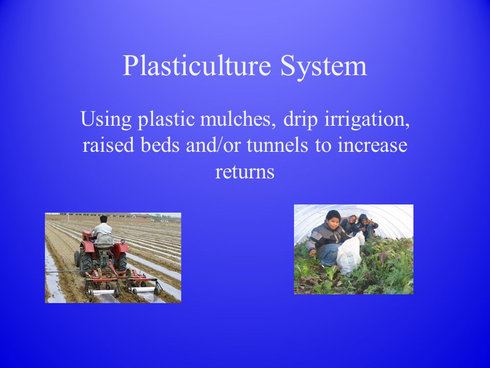 Plasticulture System Using plastic mulches, drip irrigation, raised beds and/or tunnels to increase returns
