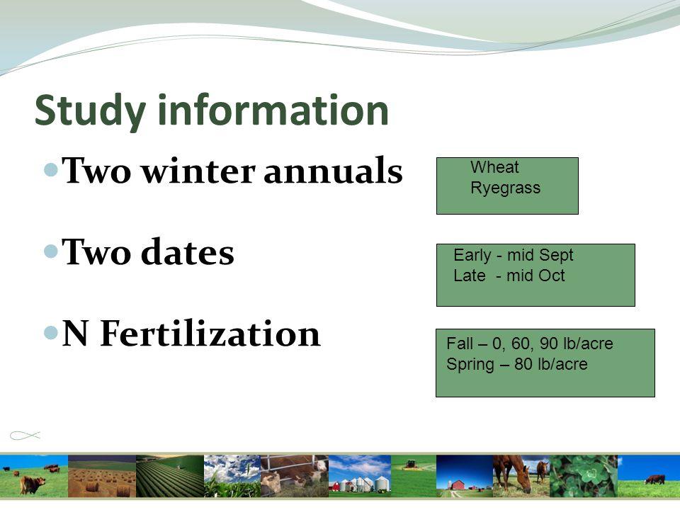 Study information Two winter annuals Two dates N Fertilization Wheat Ryegrass Early - mid Sept Late - mid Oct Fall – 0, 60, 90 lb/acre Spring – 80 lb/
