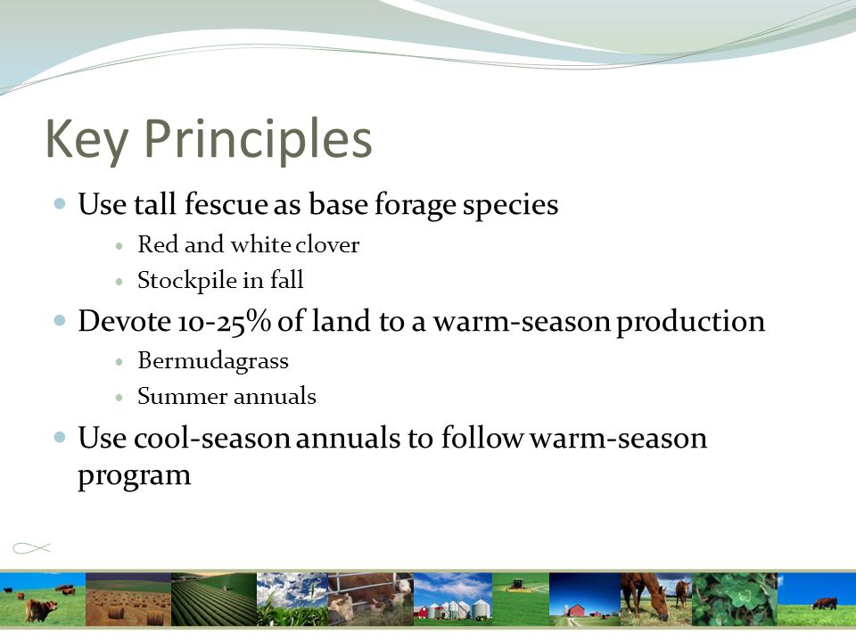 Key Principles Use tall fescue as base forage species Red and white clover Stockpile in fall Devote 10-25% of land to a warm-season production Bermuda