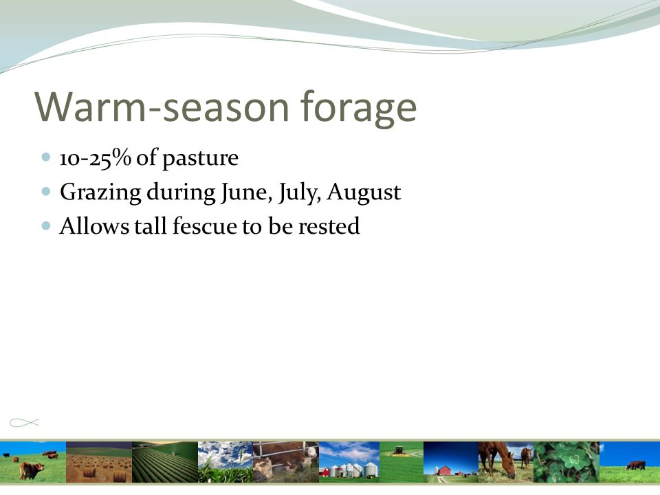 Warm-season forage 10-25% of pasture Grazing during June, July, August Allows tall fescue to be rested