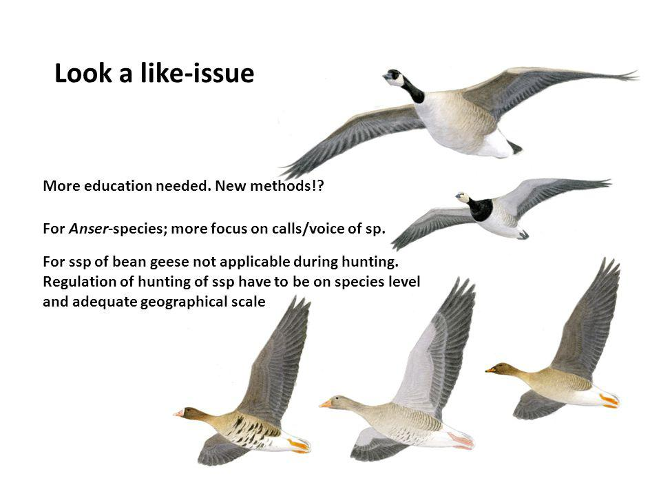 Look a like-issue More education needed. New methods!? For Anser-species; more focus on calls/voice of sp. For ssp of bean geese not applicable during