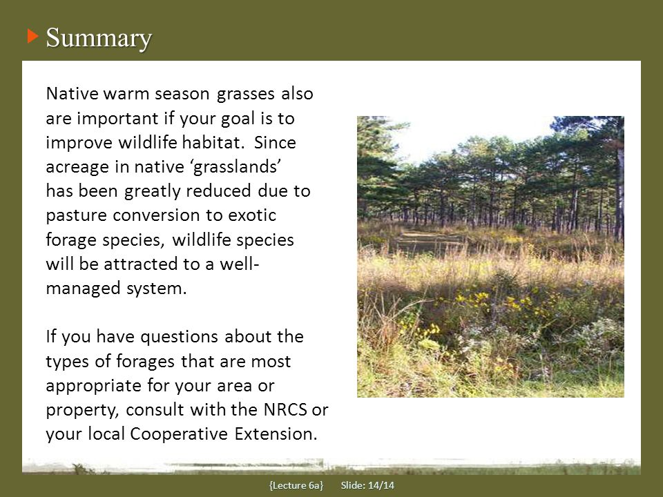 Summary Native warm season grasses also are important if your goal is to improve wildlife habitat.