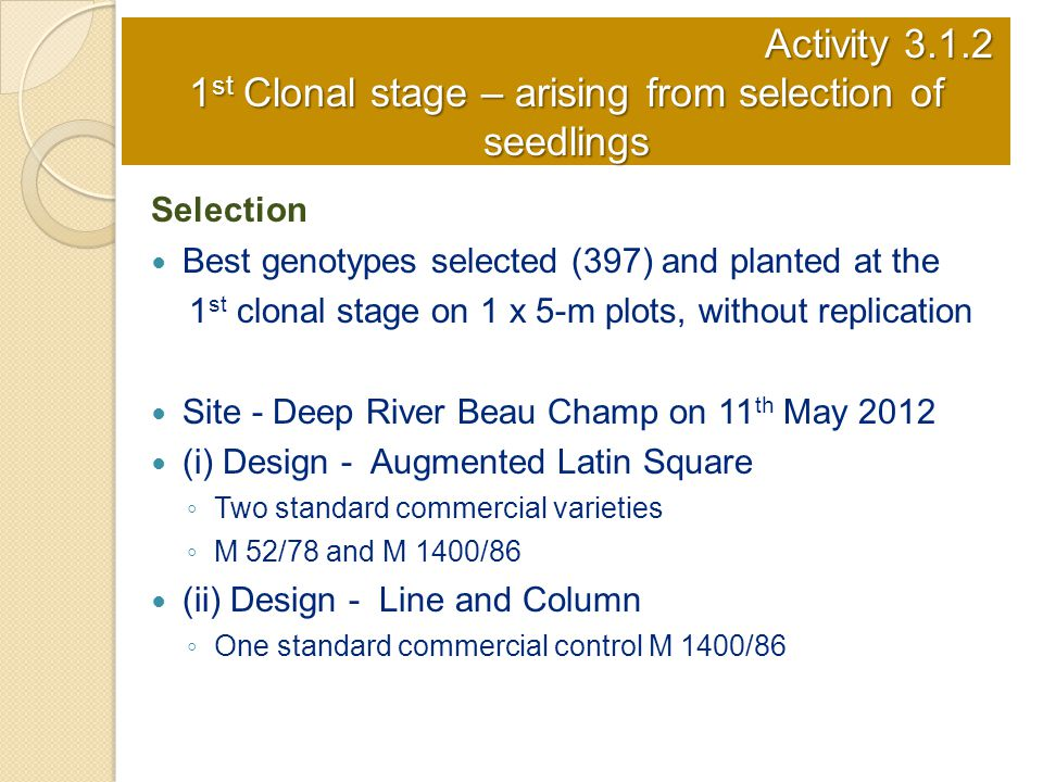 Activity 3.1.2 1 st Clonal stage – arising from selection of seedlings Selection Best genotypes selected (397) and planted at the 1 st clonal stage on