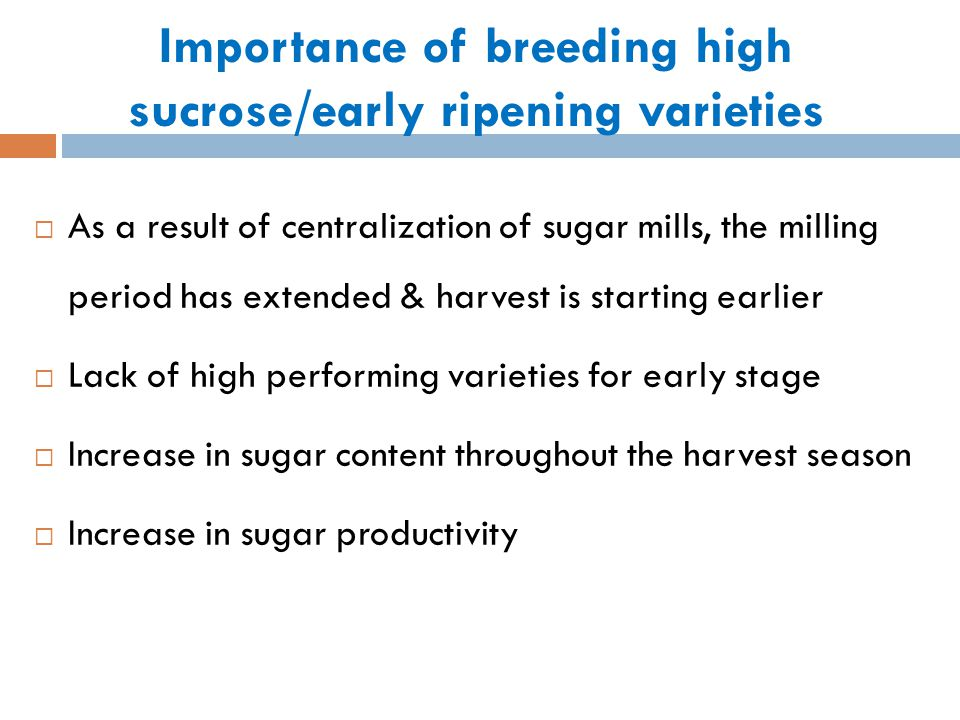Sucrose accumulation in sugarcane Sucrose accumulation patterns differ among varieties.