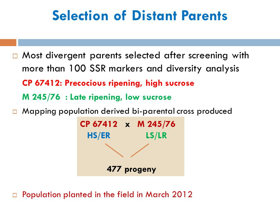 Selection of Distant Parents Most divergent parents selected after screening with more than 100 SSR markers and diversity analysis CP 67412: Precociou