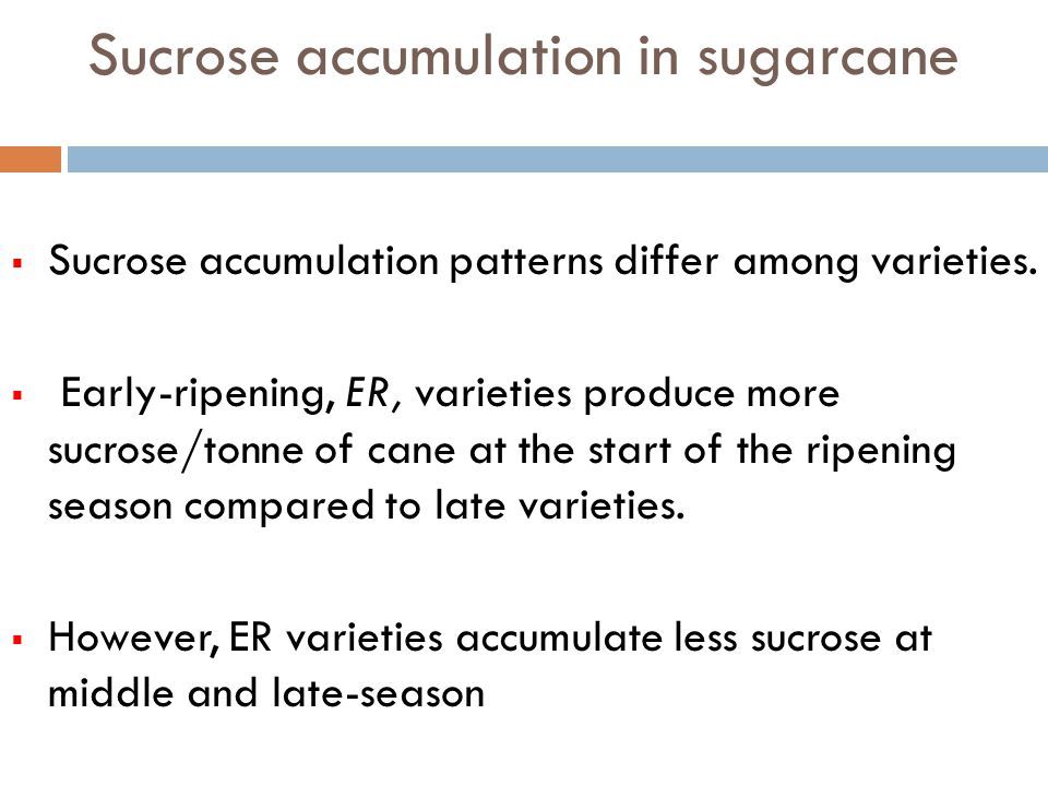 Sucrose accumulation in sugarcane Sucrose accumulation patterns differ among varieties. Early-ripening, ER, varieties produce more sucrose/tonne of ca