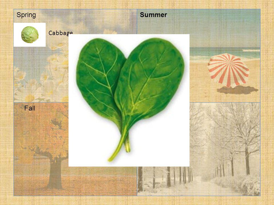 SpringSummer FallWinter Cabbage