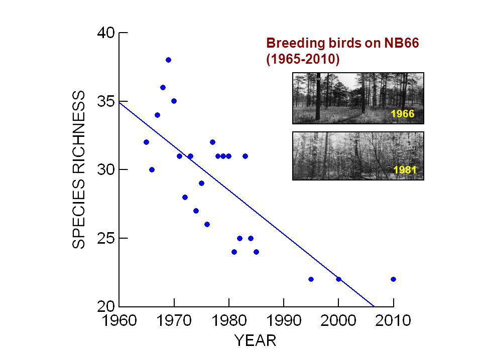 Breeding birds on NB66 (1965-2010) 1966 1981