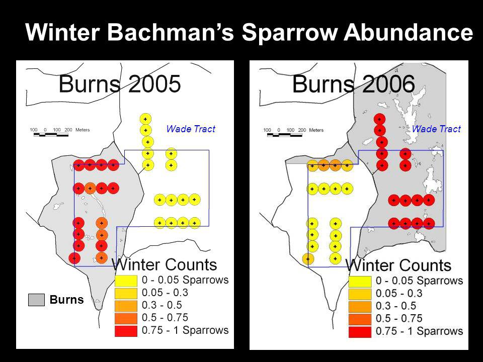 Winter Bachmans Sparrow Abundance Wade Tract Burns