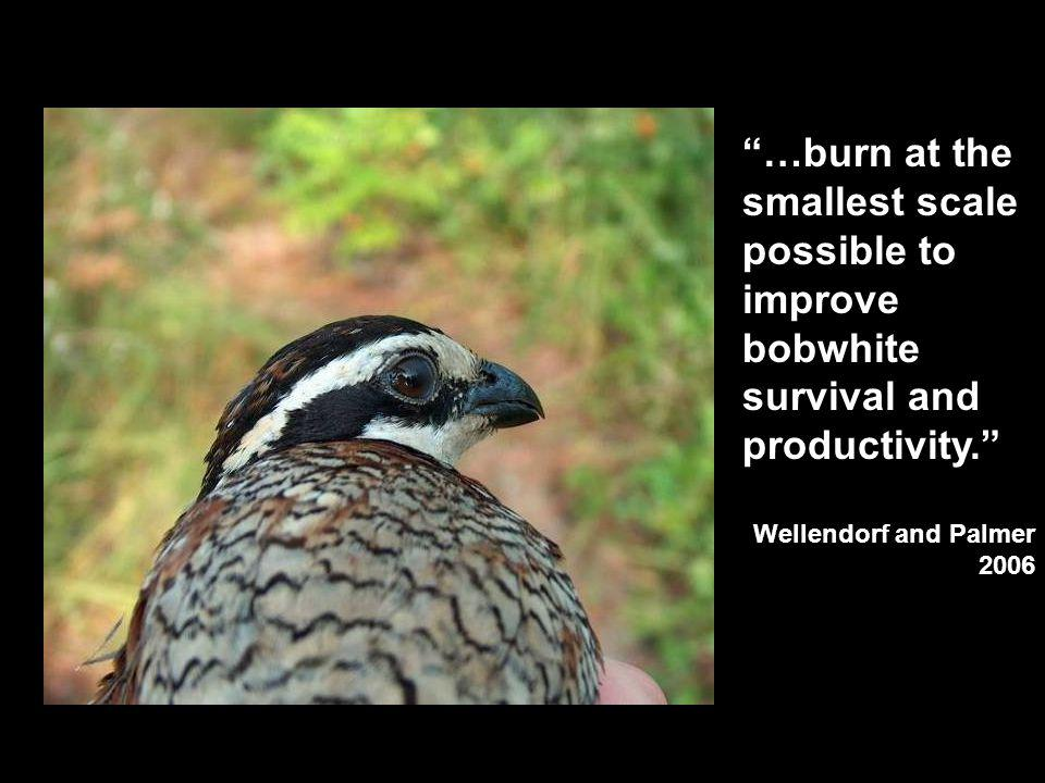 …burn at the smallest scale possible to improve bobwhite survival and productivity.