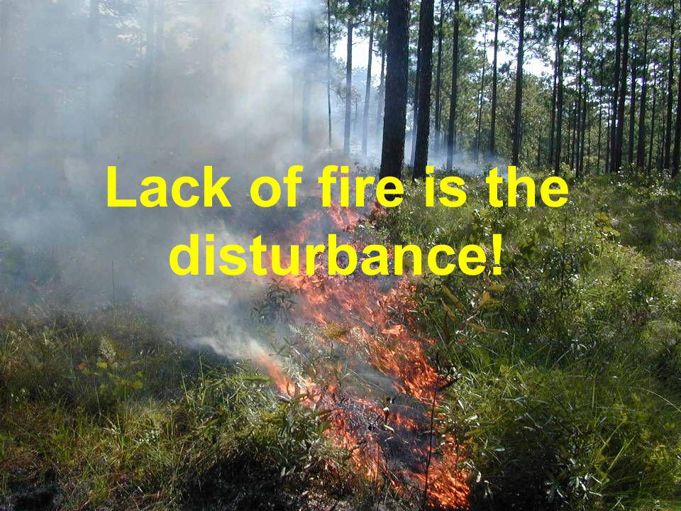 Lack of fire is the disturbance!