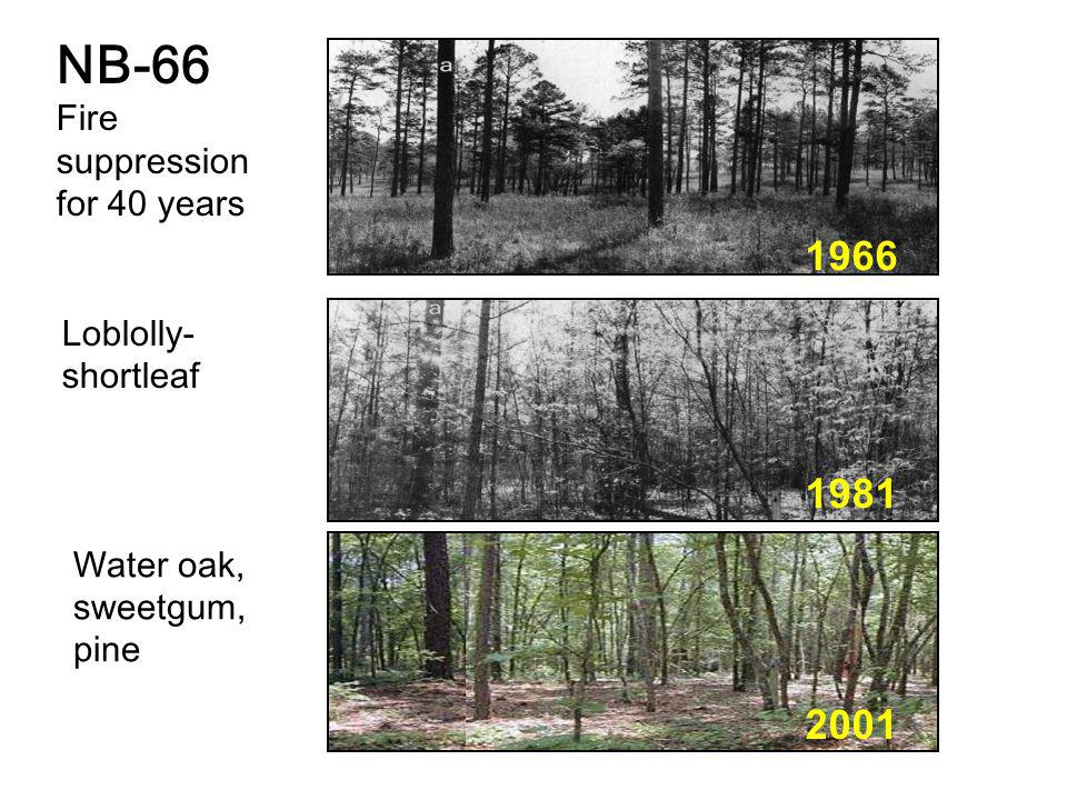 Water oak, sweetgum, pine 1966 1981 2001 Loblolly- shortleaf NB-66 Fire suppression for 40 years