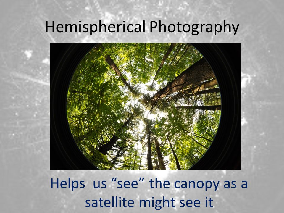 Hemispherical Photography Helps us see the canopy as a satellite might see it