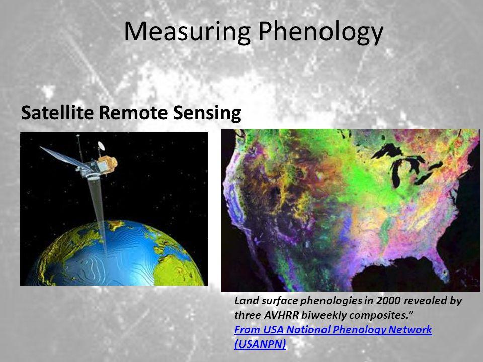 Measuring Phenology Satellite Remote Sensing Land surface phenologies in 2000 revealed by three AVHRR biweekly composites.