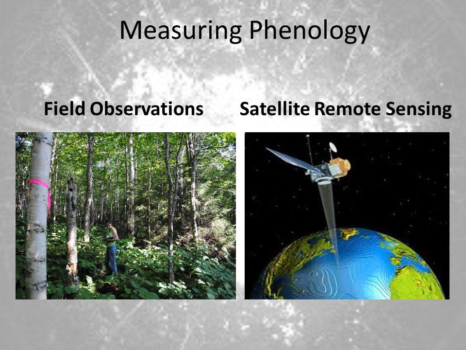 Measuring Phenology Field Observations Satellite Remote Sensing