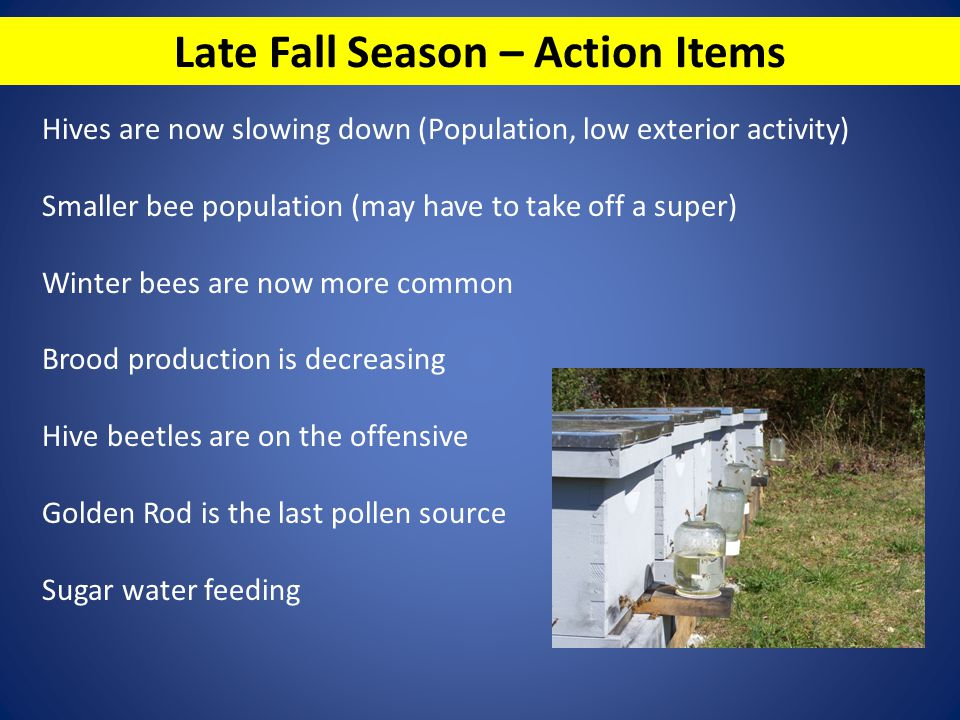 Late Fall Season – Action Items Hives are now slowing down (Population, low exterior activity) Smaller bee population (may have to take off a super) W