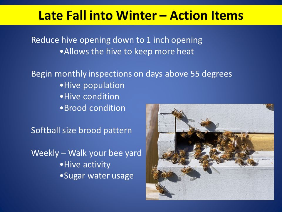 Late Fall into Winter – Action Items Reduce hive opening down to 1 inch opening Allows the hive to keep more heat Begin monthly inspections on days ab