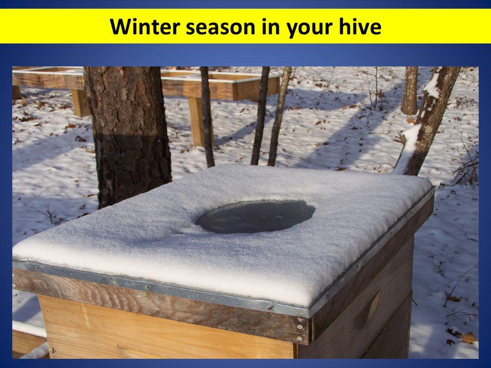Winter season in your hive