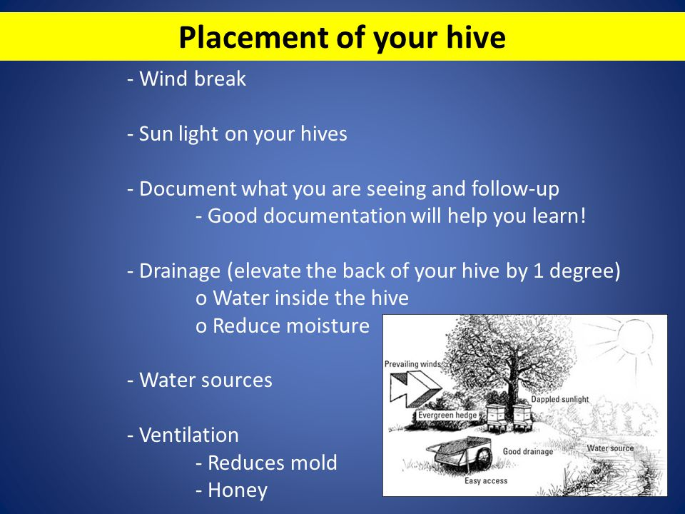 Placement of your hive - Wind break - Sun light on your hives - Document what you are seeing and follow-up - Good documentation will help you learn! -
