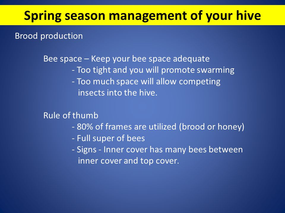 Spring season management of your hive Brood production Bee space – Keep your bee space adequate - Too tight and you will promote swarming - Too much s