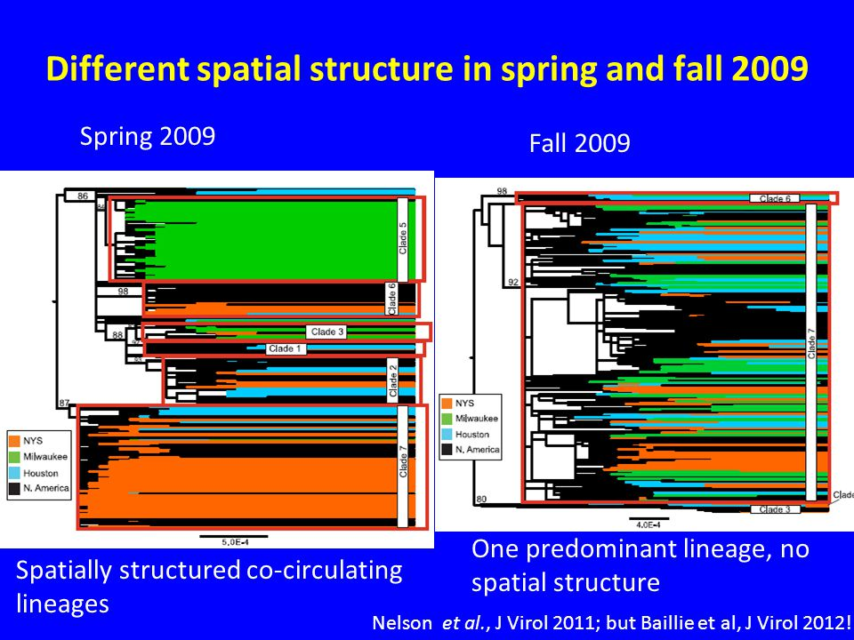 Different spatial structure in spring and fall 2009 Spatially structured co-circulating lineages One predominant lineage, no spatial structure Spring 2009 Fall 2009 Nelson et al., J Virol 2011; but Baillie et al, J Virol 2012!
