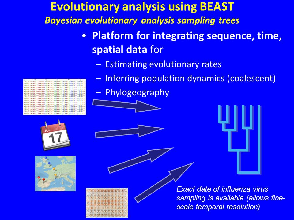 Evolutionary analysis using BEAST Bayesian evolutionary analysis sampling trees Platform for integrating sequence, time, spatial data for –Estimating evolutionary rates –Inferring population dynamics (coalescent) –Phylogeography Exact date of influenza virus sampling is available (allows fine- scale temporal resolution)