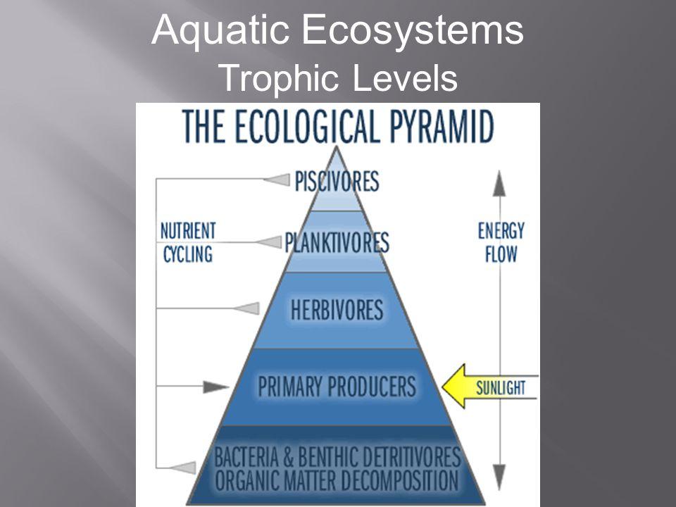 Aquatic Ecosystems Environmental Factors Temperature
