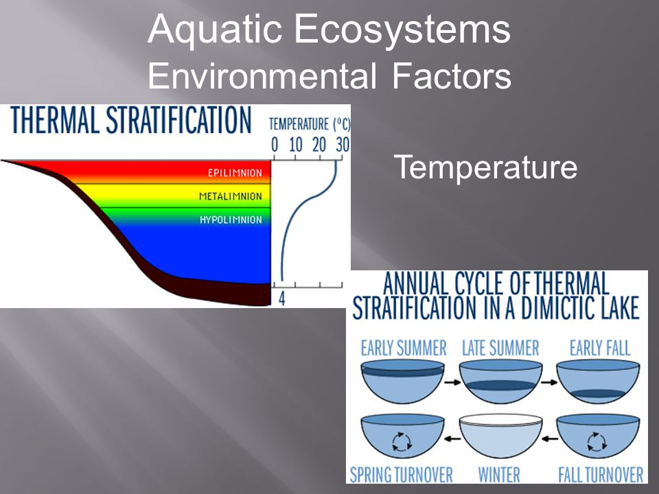 Aquatic Ecosystems Environmental Factors Light