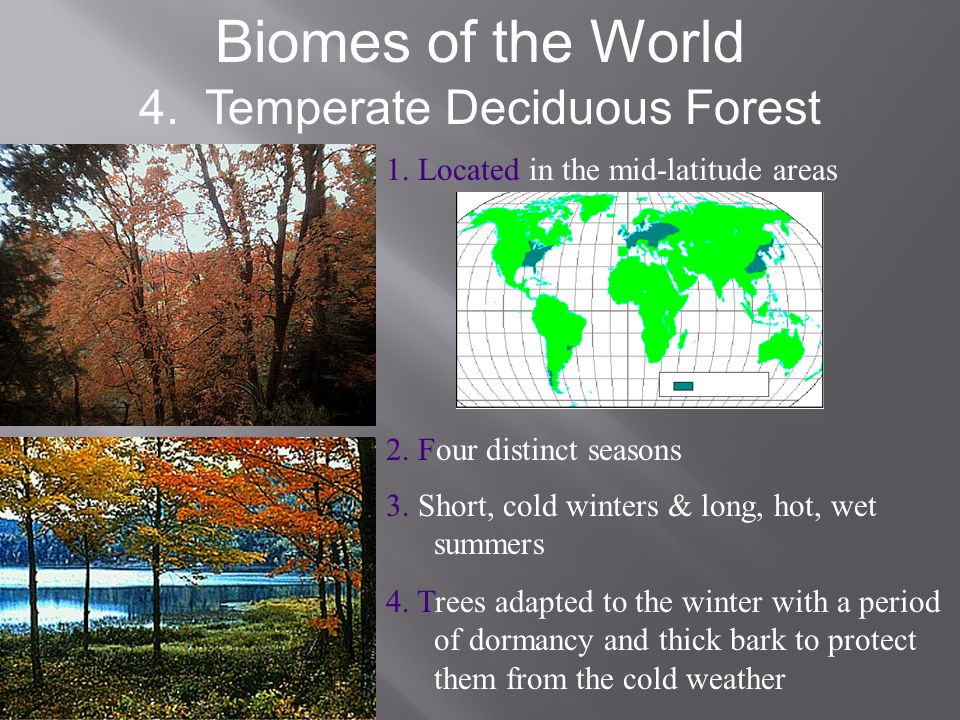 Biomes of the World 4. Temperate Deciduous Forest 1. Located in the mid-latitude areas 2. Four distinct seasons 3. Short, cold winters & long, hot, we