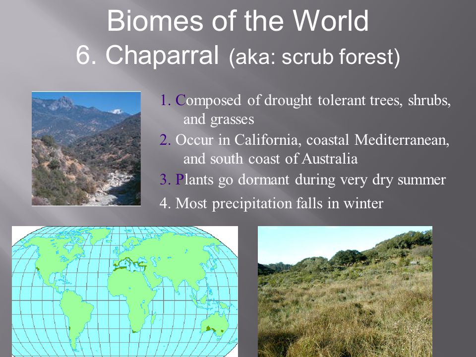 Biomes of the World 6. Chaparral (aka: scrub forest) 1. Composed of drought tolerant trees, shrubs, and grasses 2. Occur in California, coastal Medite